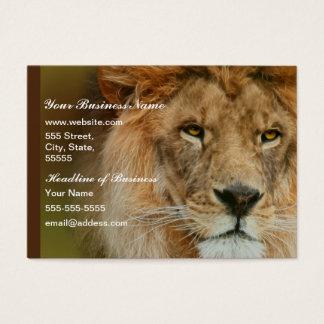 Nahes hohes majestätischen Löwes Südafrikas Visitenkarte