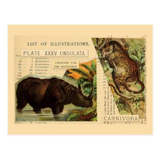 Nashorn-Jaguar-Tier-Illustrationen Postkarte