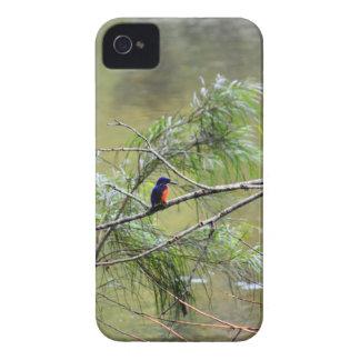 NATIONALPARK AUSTRALIEN DES EISVOGEL-EUNGELLA iPhone 4 COVER