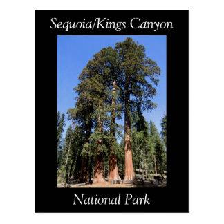 Nationalpark-Postkarte Mammutbaum-König-Canyon Postkarte