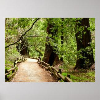Natur-Fotografie des Muir Holz-Weg-II Poster