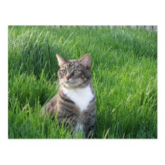Natur-Jungen-Katzen-Postkarte Postkarte