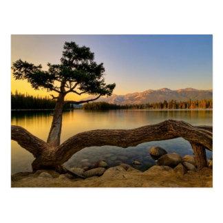 Natur-Szene Postkarte