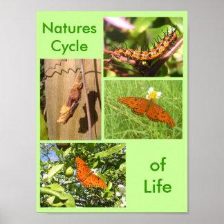 Natur-Zyklus des Lebens Poster
