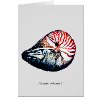 Nautilus belauensis grußkarte