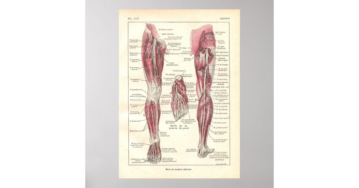Ungewöhnlich Zurück Körperanatomie Galerie - Menschliche Anatomie ...