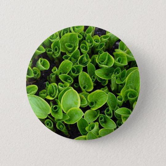 Neue grüne Hosta-Pflanzen im Garten Runder Button 5,7 Cm