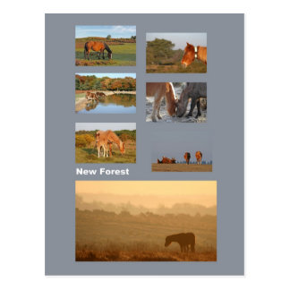 Neue Waldponypostkarte Postkarte