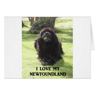 Neufundland-Liebe w pic.png Karte