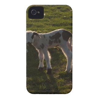 Neugeborenes Lamm iPhone 4 Case-Mate Hülle