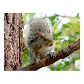 Neugierige Eichhörnchen-Tier-Postkarte Postkarte