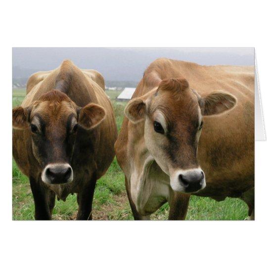 Neugierige Kühe Grußkarte