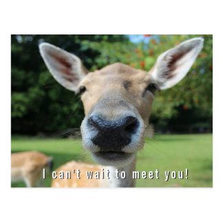 Neugierige Rotwild können nicht warten, um Sie zu Postkarte