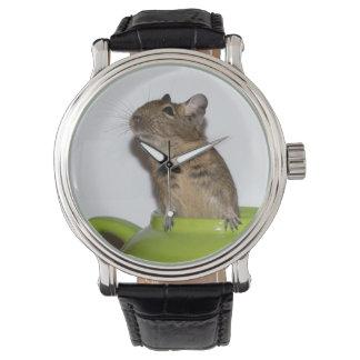 Neugieriges Degu in einer grünen Teekanne Uhr