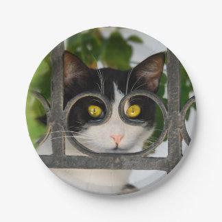Neugieriges Katzen-Schauspiel-Feld-lustiges Foto - Pappteller