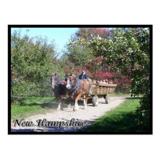 New Hampshire hayride Postkarte