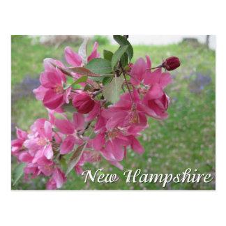 New HampshireHolzapfel-Baumblüten Postkarte