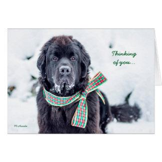 Newfie Feiertags-Wünsche für Sie Karte
