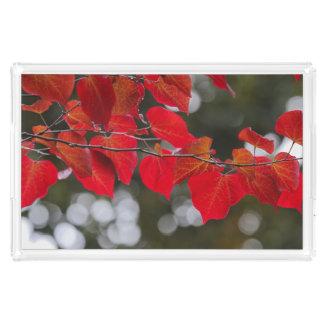 Nicht auch verlässt Weihnachten-y Rot Fotografie Acryl Tablett