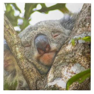 Nickerchen machender Koala-Bär Keramikfliese
