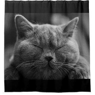 Nickerchen machendes graues Katzen-Gesicht Duschvorhang