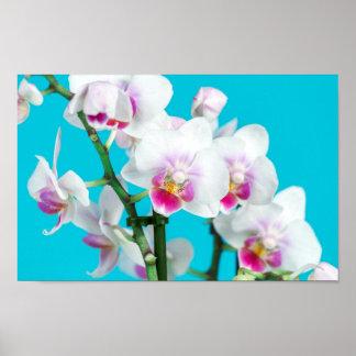 Niederlassung der weißen Orchidee auf Aqua Poster