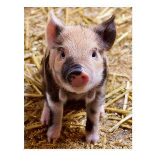 Niedliche Baby-Ferkel-Viehbarnyard-Babys Postkarte