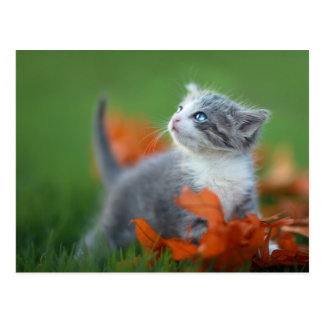 Niedliche Baby-Kätzchen, die draußen im Gras Postkarte