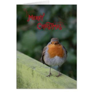 Niedliche flaumige Robin-Weihnachtskarte Grußkarte