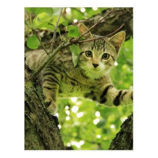 Niedliche graue Katze in einem Baum Postkarte