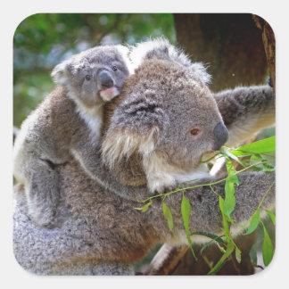 Niedliche Koala Quadrat-Aufkleber