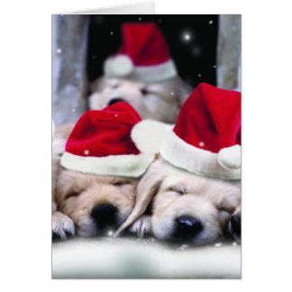 Niedliche Labrador-Welpen mit Weihnachtshüten Karte
