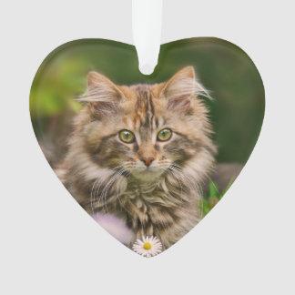 Niedliche Maine-Waschbär-Kätzchen-Katze in einer Ornament