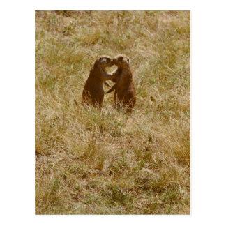 Niedliche praire Hundepostkarte Postkarte