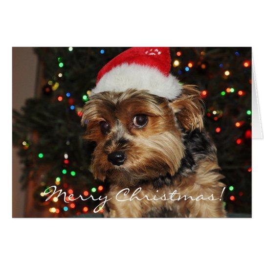 Niedliche Yorkshire-Terrier-Weihnachtskarte Grußkarte