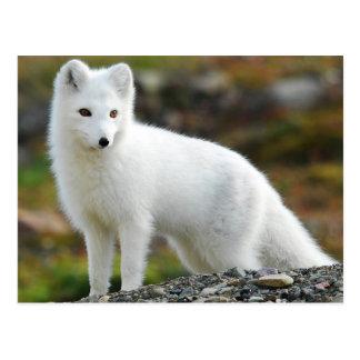 Niedlicher arktischer Fox Postkarte