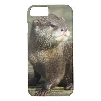 Niedlicher Baby-Otter iPhone 8/7 Hülle