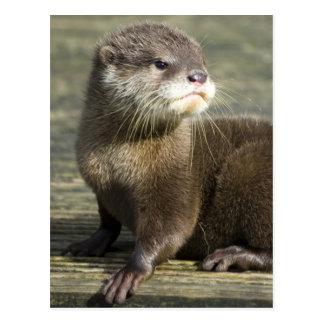 Niedlicher Baby-Otter Postkarte