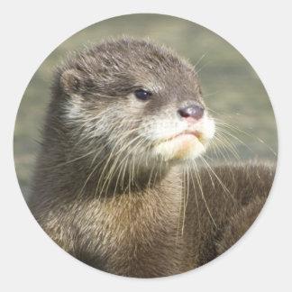Niedlicher Baby-Otter Runder Aufkleber