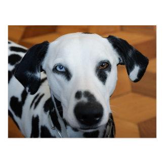 Niedlicher blaues Augen-Dalmatiner-Hund Postkarte