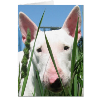 Niedlicher Englisch-Stier-Terrier Grußkarte