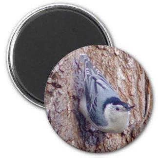 Niedlicher Kleiber-Vogel-Magnet Runder Magnet 5,1 Cm