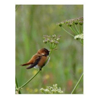Niedlicher kleiner Kolibri Postkarte