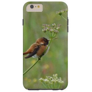 Niedlicher kleiner Kolibri Tough iPhone 6 Plus Hülle