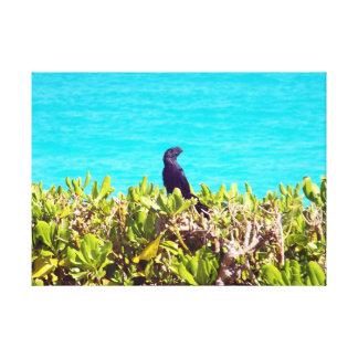 Niedlicher kleiner schwarzer Vogel Leinwanddruck