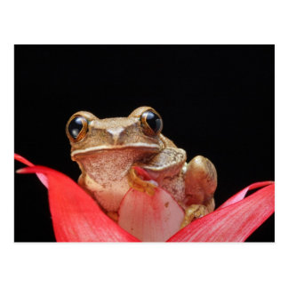 Niedlicher, lustiger Frosch, der auf Lilie - Postk Postkarte