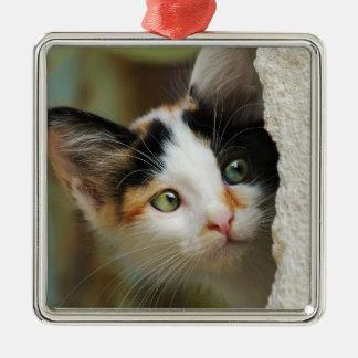 Niedlicher neugieriger quadratisches silberfarbenes ornament