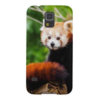 Niedlicher roter Panda-Bär Hülle Fürs Galaxy S5