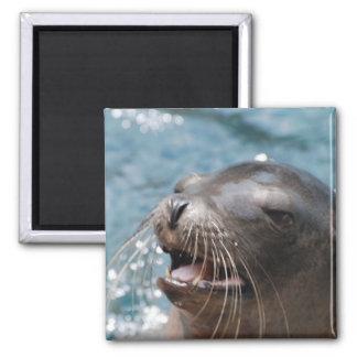 Niedlicher Seelöwe-Magnet Quadratischer Magnet