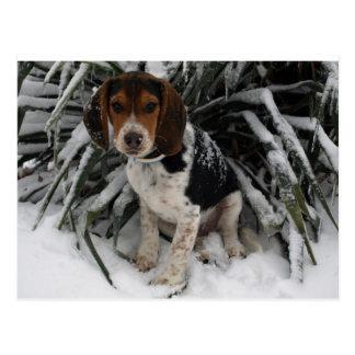 Niedlicher Snoopy Beagle-Welpen-Hund im Schnee Postkarte